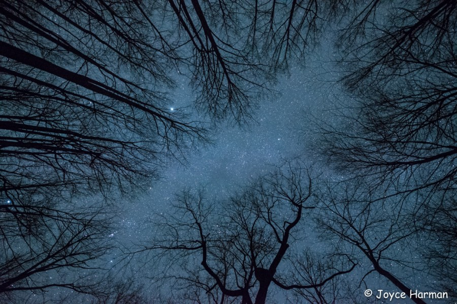 trees overhead